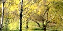 Frühling im Park.  von Bernd Vagt