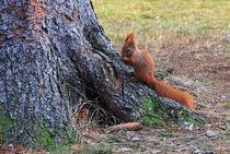 Eichhörnchen von Wolfgang Dufner