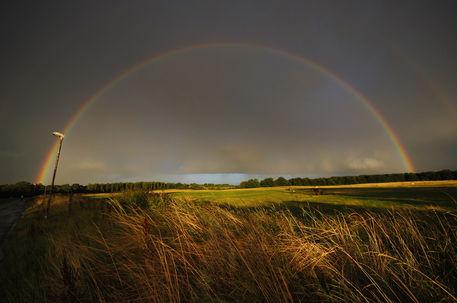 Harlow-common-rainbow-12