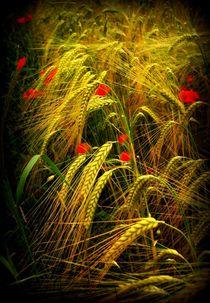Getreidefeld  von Elke Balzen