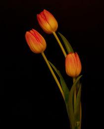 Tulip tulip tulip von Sara Messenger