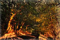 Autumn Light by Nigel  Bangert