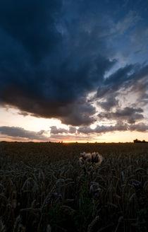 Thistle Sunset by Nigel  Bangert