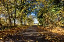 Autumn-forest-4