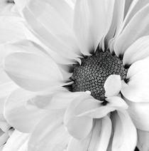 Bright Daisy von Kevin Tate