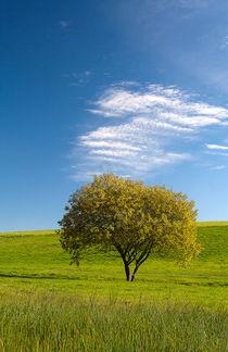 autumn Tree von tr-design
