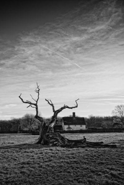 Hatfield-forest-1-2