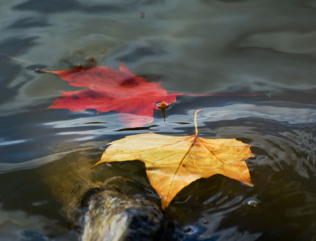 Leaves-in-water