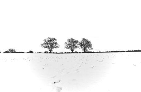 Three-trees-1