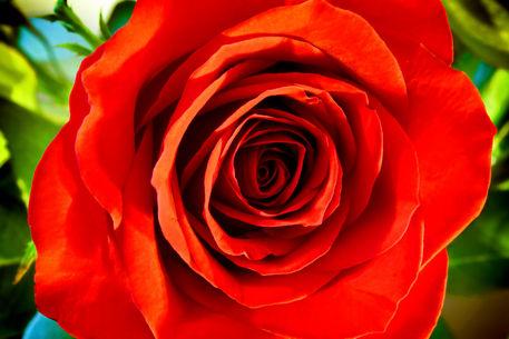 Pretty-red