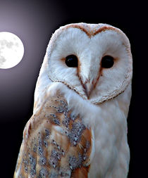 Barn Owl by Moonlight by Roger Butler