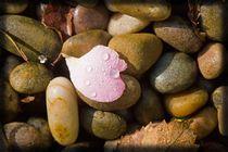 Love in The Rain by LIZ Alderdice
