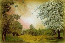 Frühlingserwachen  von Elke Balzen