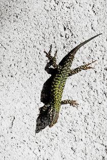 Lizard von Lars Hallstrom