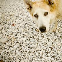 Curious dog von Lars Hallstrom