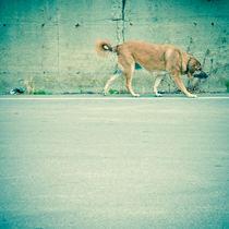 Walking dog by Lars Hallstrom