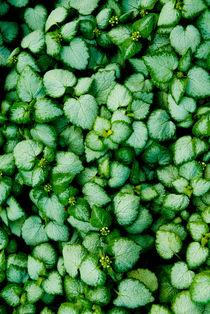 Green leaves von Lars Hallstrom