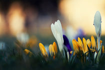 Springtime colours von Jing Zhou