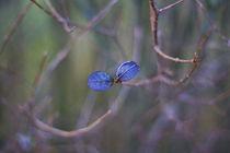 Flora by Levente Bodo