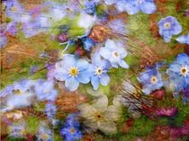 Frühlingsboten by claudiag