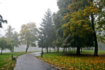 mist in the park by Pawel Bielawski
