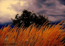 Golden Grasses von Rick Todaro