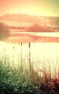 Reeds by Elizabeth  Wilson