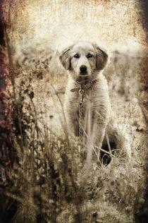 grunge puppy von meirion matthias