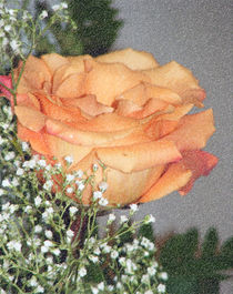 Rose II by Sandra Woods
