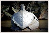 Schildkröte by Petra Hinz