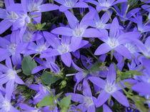 Blaue Sterne von Eugen Bill