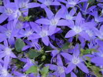Blaue Sterne by Eugen Bill