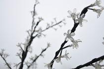 plastic flower by huiwen chen