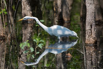 Great Egret by Louise Heusinkveld