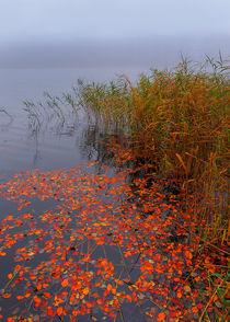 Schwimmendes Herbstlaub von Wolfgang Wittpahl