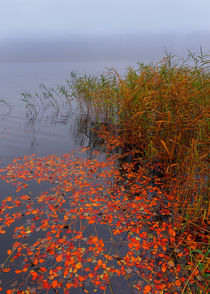 Schwimmendes Herbstlaub by Wolfgang Wittpahl
