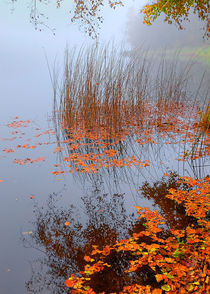 Seeufer im Nebel by Wolfgang Wittpahl