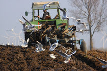 Möwen am Trecker - Seagulls on the tractor von ropo13