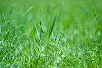 Das Zirpen im Gras by Katharina Weigl
