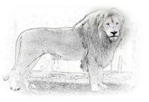 White Lion -1- by Christine  Hofmann