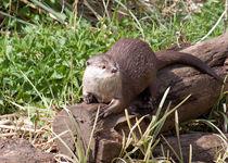 Otter von John Biggadike