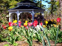 Tulips by Gazebo  by Rick Todaro