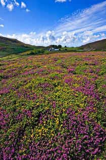 spectacular Sychnant colour von meirion matthias