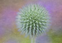 Purple Haze von inkedsandra