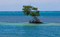Mangrove von Bettina Breuer