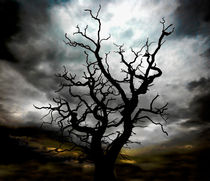 lightning tree 2 von meirion matthias