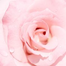Rose-quad