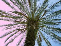 Palmenhimmel von Tina M. Emig