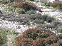 Mediterranes-felsbewuchs-tme