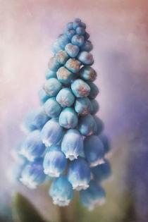 Frühlingszipfel by moqui